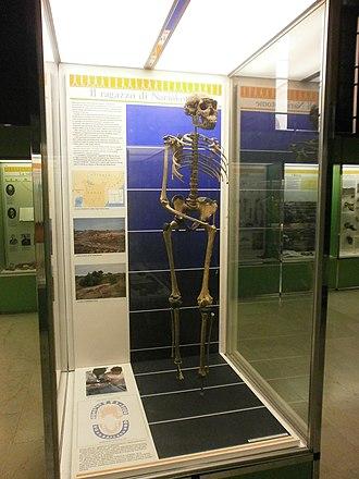 Museo Civico di Storia Naturale di Milano - Image: Museo Civico di Storia Naturale di Milano Il ragazzo di nariokotome