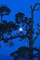 My Public Lands Roadtrip- Cascade-Siskiyou National Monument in oregon (19070212236).jpg