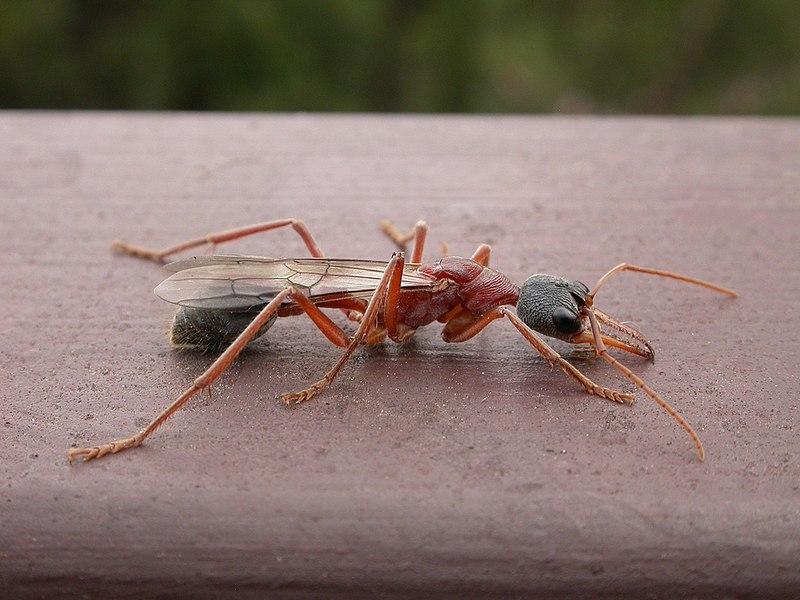 sexe fourmi noir BBW mature maman sexe