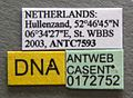 Myrmica lonae casent0172752 label 1.jpg