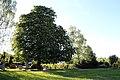 ND-7331-392 Kastanie Friedhof Bornheim-IMG 8240.jpg