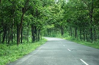 National Highway 766 (India) - NH-766 through Bandipur forest in Karnataka