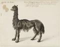 NL-HlmNHA 53004668 Alpaca.tif