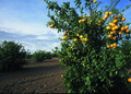 NRCSAZ02038 - Arizona (359)(NRCS Photo Gallery).tif