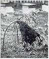 NSRW Bee Swarm.jpg