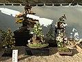 Nagoya Castle Chrysanthemum Competition 2017 16.jpg