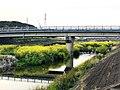 Nanohana in Utsutsu river - 3.jpg