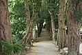 National Botanic Garden,Dublin,Ireland - panoramio (30).jpg