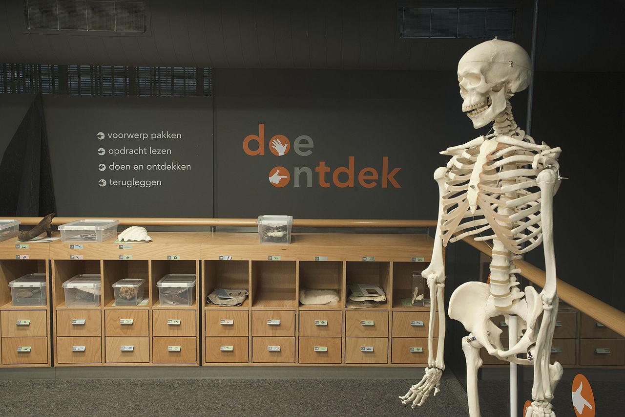 file:naturalis biodiversity center - museum - discover 04 - lab, Skeleton