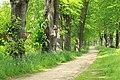 Naturdenkmal Lindenallee in Lößnitz Erzgebirge 2H1A2707WI.jpg