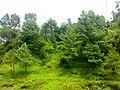 Nature at Ayyuba - panoramio.jpg