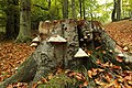 Nature reserve Vlčí důl in autumn 2014 (8).JPG