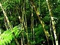 Natureza - panoramio - Alexandre Possi (11).jpg