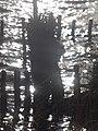 Naturschutzgebiet Ewiges Meer 31-10-2018 Chr Didillon DSC01778 (99).jpg