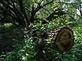 Naturschutzgebiet Heuckenlock 21.05.2014 Phase 106.JPG