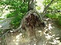 Neuer Wildenstein - Nationalpark Sächsische Schweiz 12.JPG