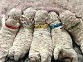 Newbornpups.jpg