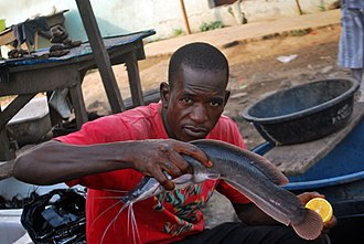 Catfish - Catfish vendor in Ilorin, Kwara