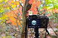Nikon 1 V1 + Fisheye FC-E9 (4).jpg