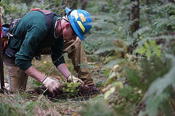 North Carolina wildlife technician Charles Lawson plants a spruce tree (10344354166).jpg