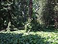 Odessa Main Botanical garden 040.jpg