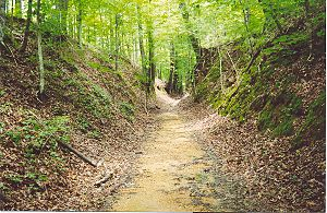 "Natchez Trace - The ""Sunken Trace"""