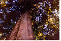 Old tree.stanley park. vancouver. british columbia. canada.jpg
