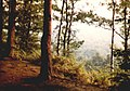 Oldbury Woods at Ightham - geograph.org.uk - 107007.jpg