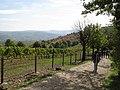 Oplenac, 2013-10-12 - panoramio.jpg
