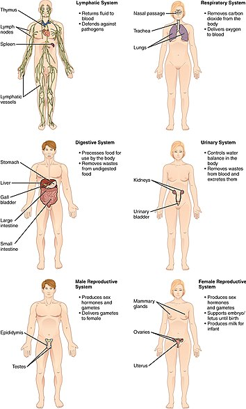 list of systems of the human body - wikipedia,
