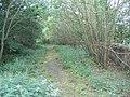 Overgrown Road - geograph.org.uk - 206865.jpg