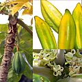 Owoce Babako.jpg