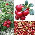 Owoce Borówka brusznica.jpg