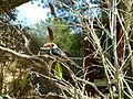 Pássaro na árvore.jpg