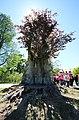 Pücklersche Blutbuche Muskau-Park Bad Muskau...2H1A1319WI.jpg