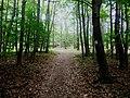 Přílepy (KM), les u lesní kaple.jpg