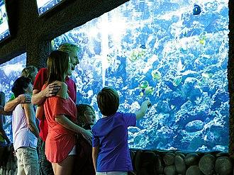 Palmitos Park - Image: P Park Acuario 1