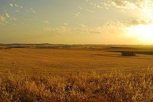 Paisaje, provincia de Ciudad Real (3742104133).jpg