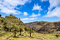 Palmen im Tal Valle Gran Rey auf La Gomera, Spanien (48293725606).jpg
