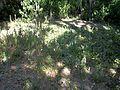 Palmetto FL Emerson Point Portavant Mound top03.jpg