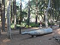 Papua New Guinea Sculpture Garden at Stanford University, central area 4.jpg