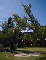 Parade ground trees (6022655636).jpg