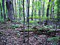 Parc-nature du Bois-de-l-ile-Bizard 13.jpg