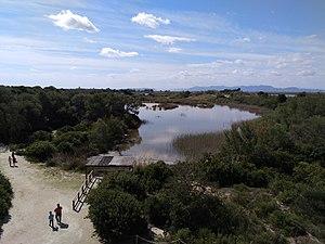 Parque Natural de la Albufera (II).jpg
