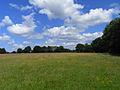 Pasture, Baughurst - geograph.org.uk - 1775974.jpg
