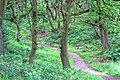 Permissive Footpath through Newton Woods - geograph.org.uk - 865301.jpg