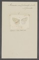 Perusia - Print - Iconographia Zoologica - Special Collections University of Amsterdam - UBAINV0274 059 06 0058.tif