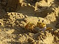 Petit crabe.jpg