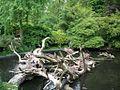 Phalacrocorax carbo in Antwerp Zoo.jpg