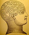 Phrenologists attempted to corrolate mental functions with specific parts of the brain